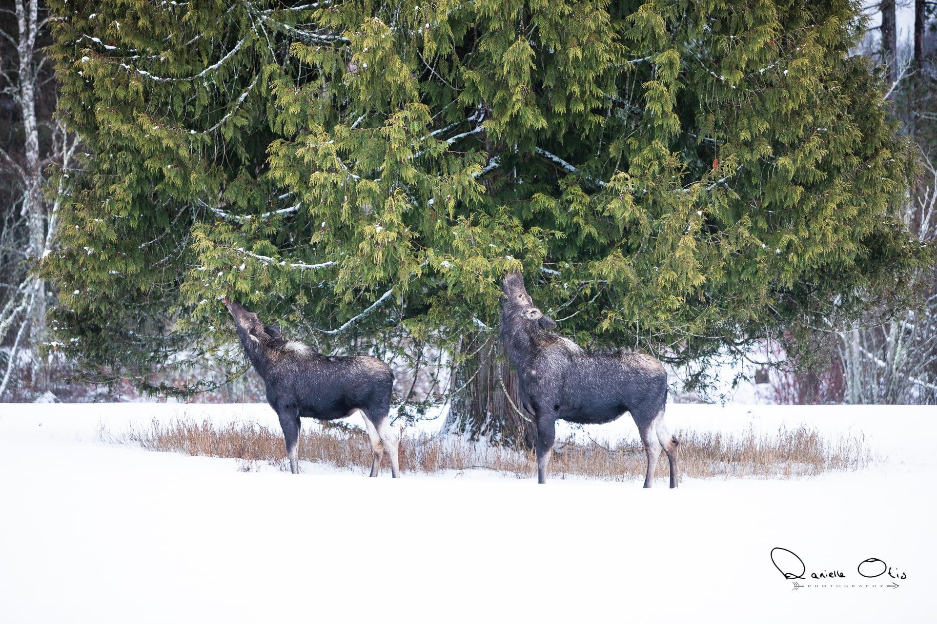 Wildlife at Western Pleasure Guest Ranch
