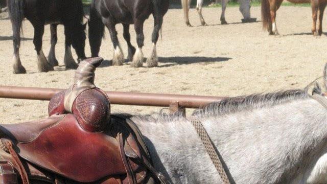 Horseback outside the arena