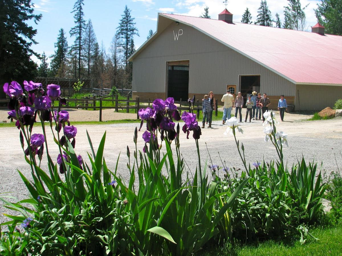large indoor arena in the background with flowers in the foreground