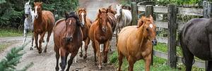 Horses running in