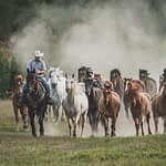 Horse herd running with rider out front photography workshop